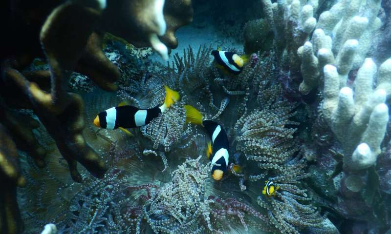 Breathing space for a marine world under pressure