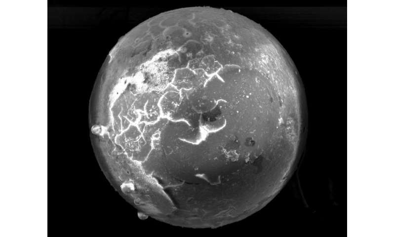 Cosmic pearls: Fossil clams in Florida contain evidence of ancient meteorite