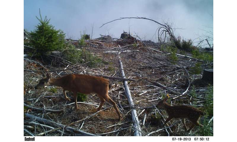 Deer and elk can help young Douglas-fir trees under some conditions