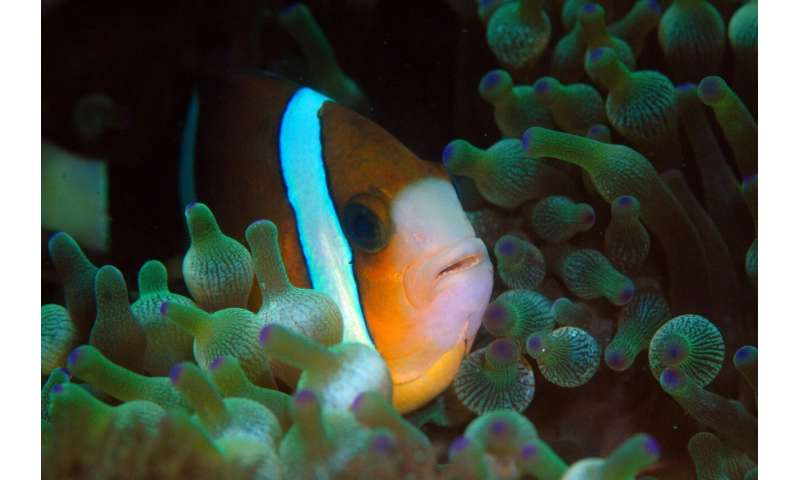 Finding Nemo's cousins