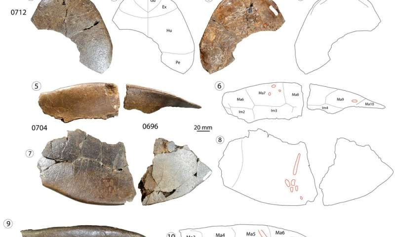 Fossil research unveils new turtle species and hints at intercontinental migrations