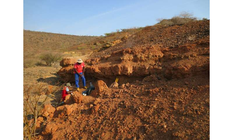 Fossil teeth from Kenya solve ancient monkey mystery