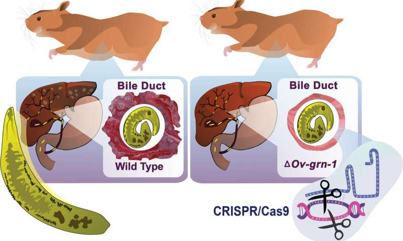 Gene-editing tool CRISPR/Cas9 shown to limit impact of certain parasitic diseases