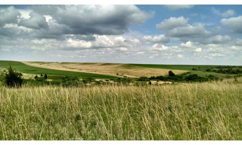 Global change is triggering an identity switch in grasslands