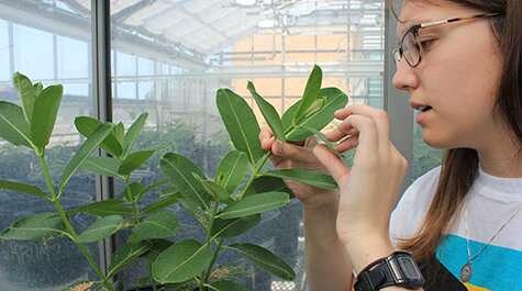Invernadero utiliza insectos depredadores para el control de plagas