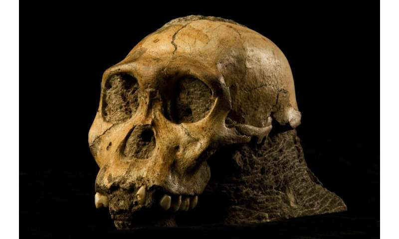 Homo naledi and Australopithecus sediba to be exhibited in Perot Museum