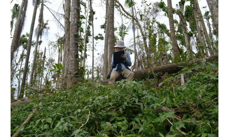 Hurricane Maria study warns: Future climate-driven storms may raze many tropical forests