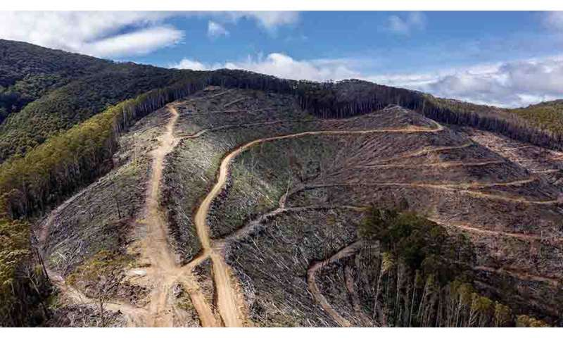 Illegal logging on steep slopes putting lives at risk