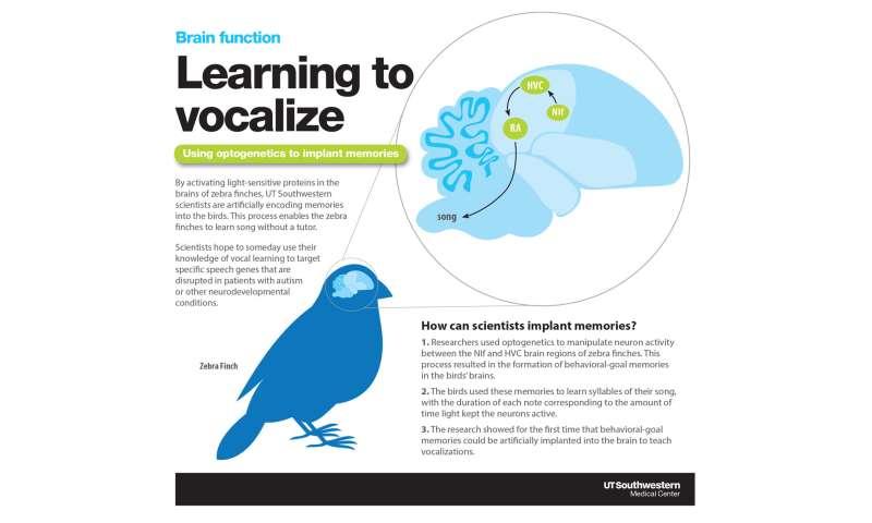 Implanted memories teach birds a song