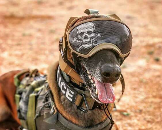 Innovative hearing protection may protect military working dogs