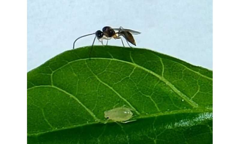Insects might soon be trained to protect crops