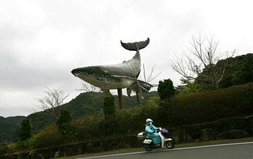 Japan whalers discuss plan to resume commercial hunt July 1