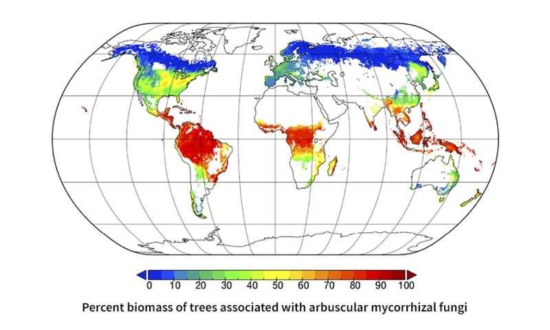 Mapeo de simbiosis microbianas en bosques