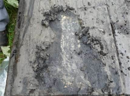 Microorganisms protect iron sheet piling against degradation