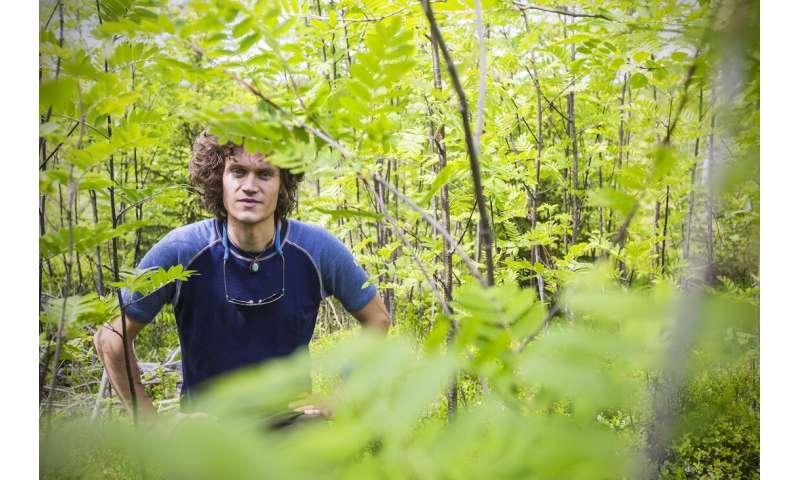 Moose: like having wild livestock in the woods
