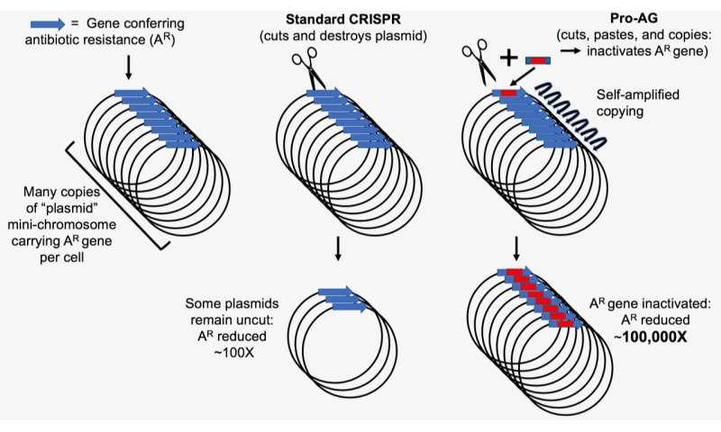 New CRISPR-based system targets amplified antibiotic-resistant genes