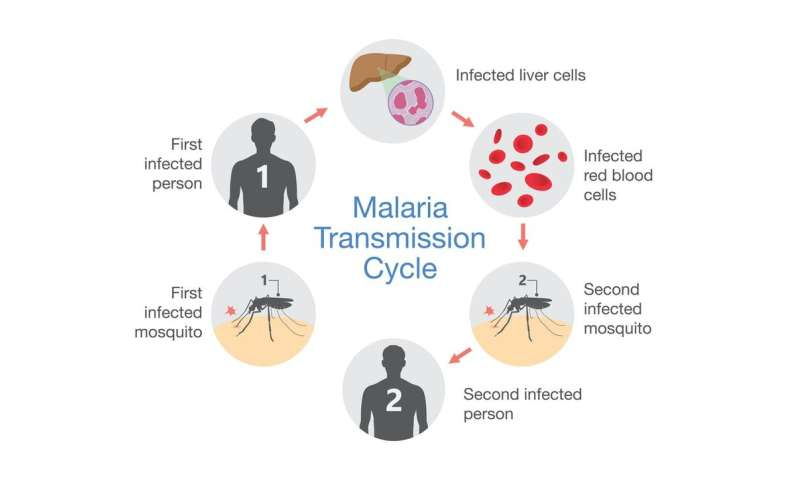 New diagnostic test for malaria uses spit, not blood