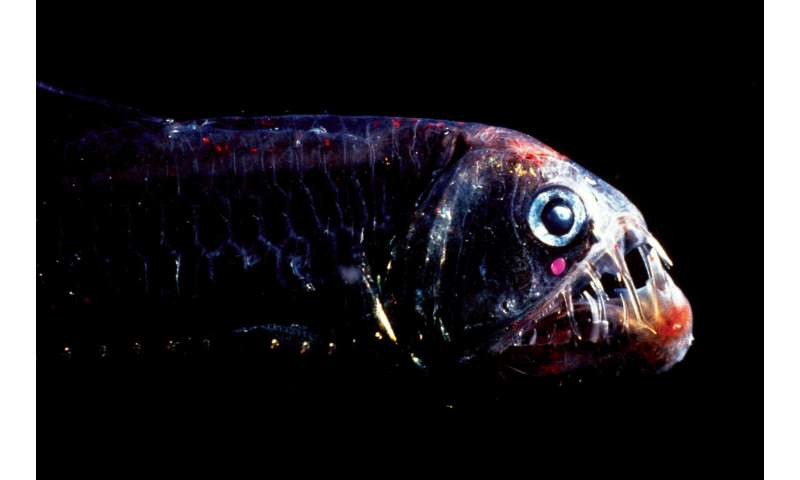 New type of highly sensitive vision discovered in deep-sea fish