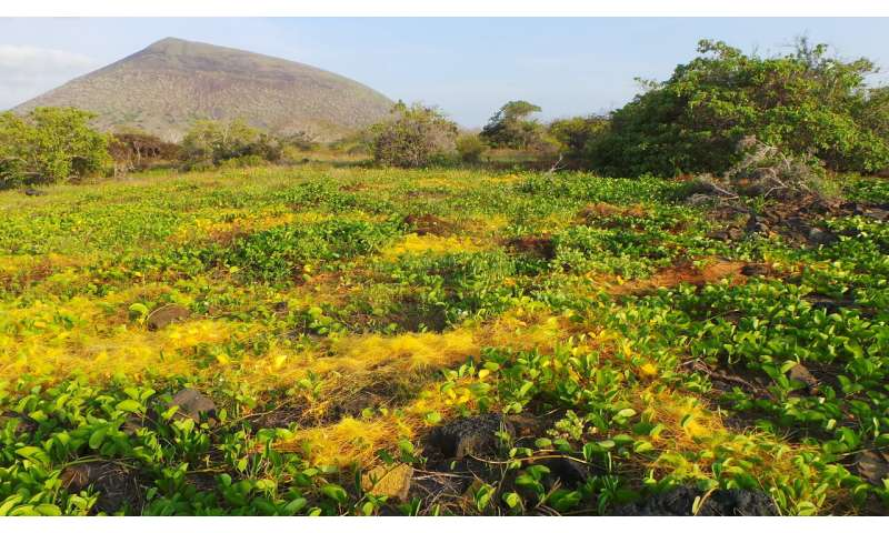 Parasitic plants use stolen genes to make them better parasites