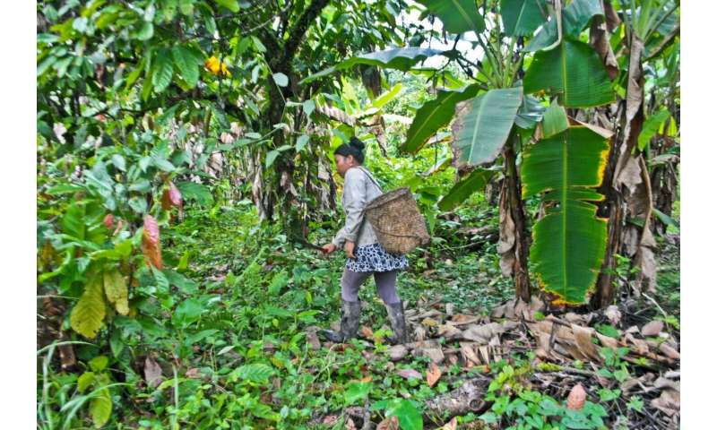 Pharmacy in the jungle study reveals indigenous people's choice of medicinal plants