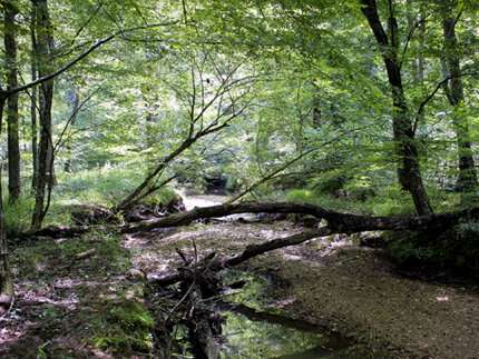 Preserved pollen tells the history of floodplains