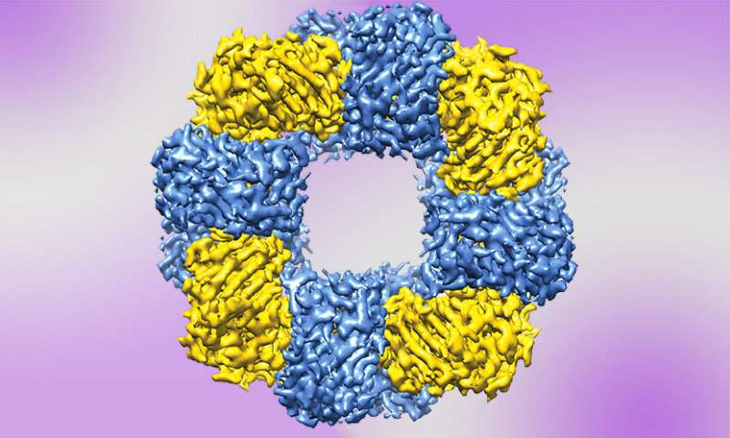 Scientists coax proteins to form synthetic structures with method that mimics nature