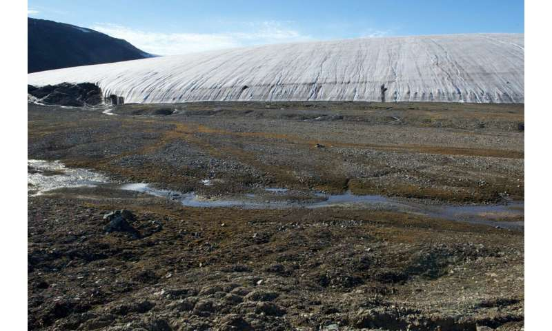 Scientists identify two new species of fungi in retreating Arctic glacier