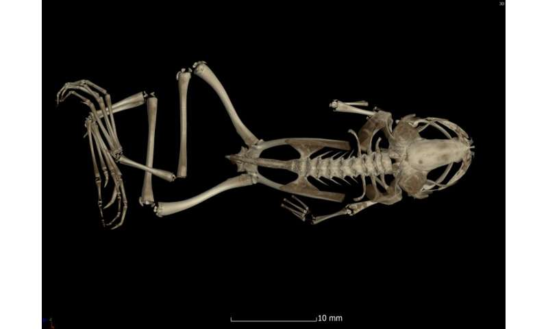 Scientists solve lingering mystery of poorly understood frog