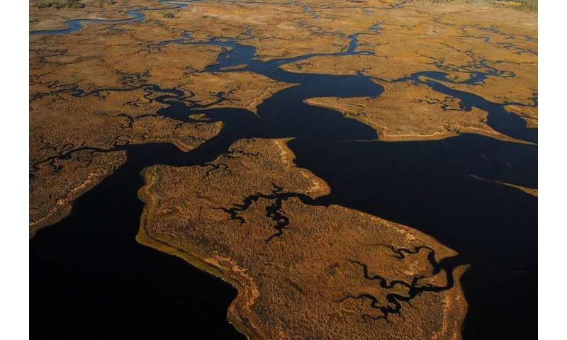 Los prados de algas marinas albergan vida silvestre durante siglos, destacando la necesidad de conservación