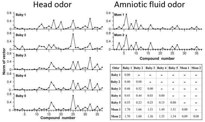 Sensory and chemical analyses of the odor of newborn babies' heads suggests importance in facilitating bonding and care-giving b
