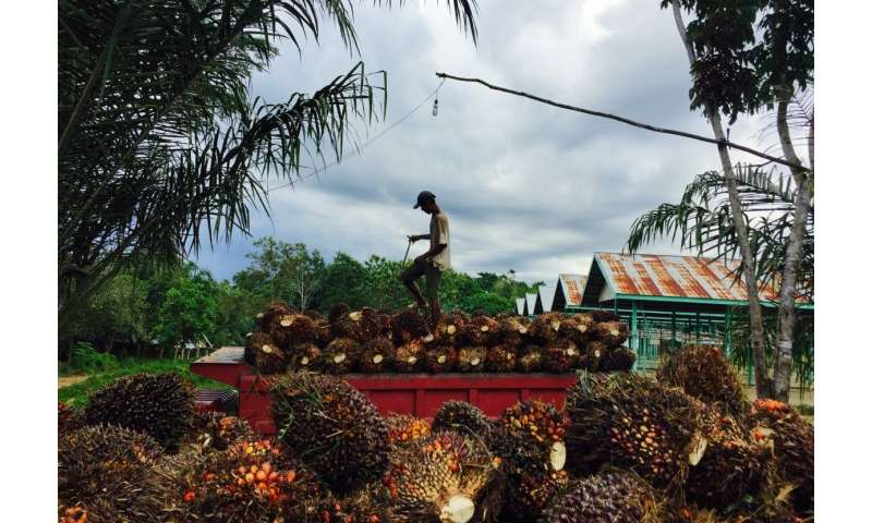 The double-edged sword of palm oil