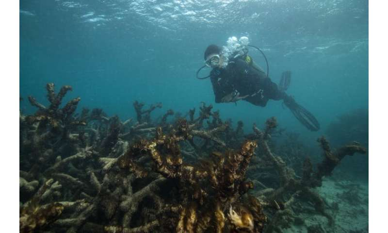 'This situation brings me to despair': two reef scientists share their climate grief