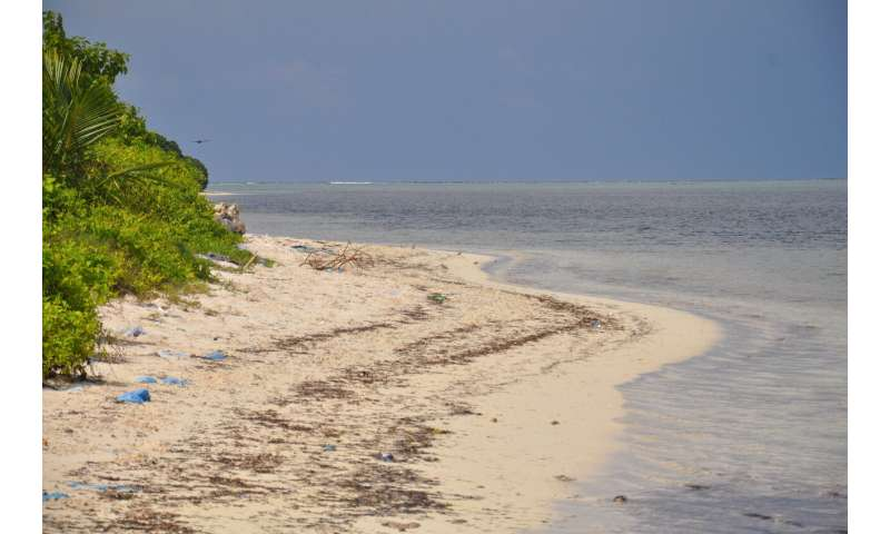 Tourism or permanent settling: Study shows different consequences for coastal fauna