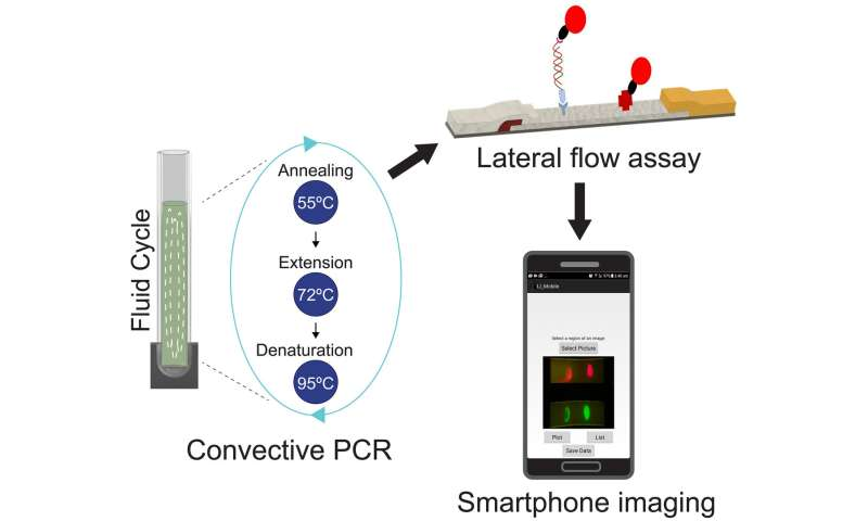 Using quantum dots and a smartphone to find killer bacteria