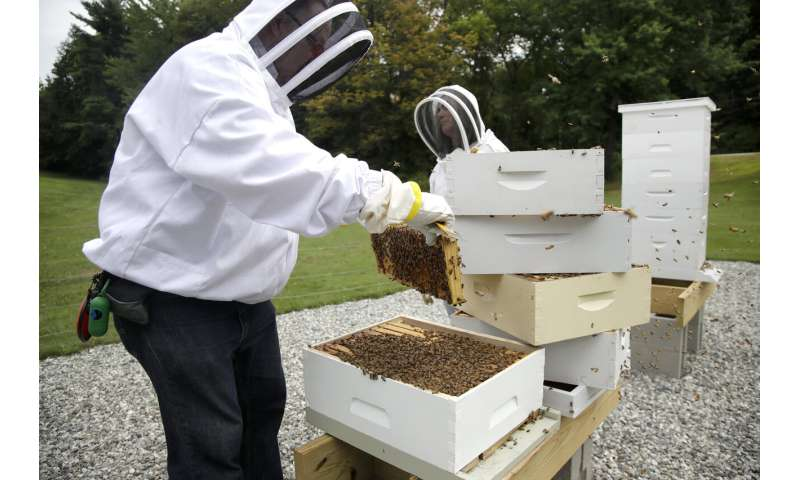 Veterans with PTSD, anxiety turn to beekeeping for relief