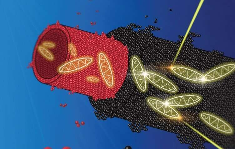 Watching energy transport through biomimetic nanotubes