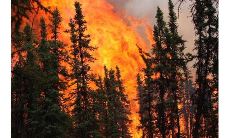 Wildfires could permanently alter Alaska's forest composition