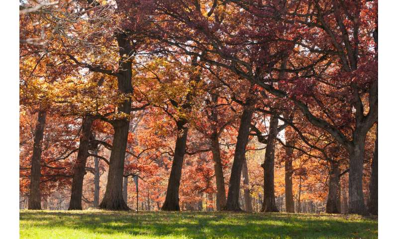 Researchers map the evolutionary history of oaks
