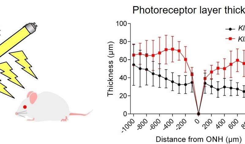 Researchers discover molecular light switch in photoreceptor cells