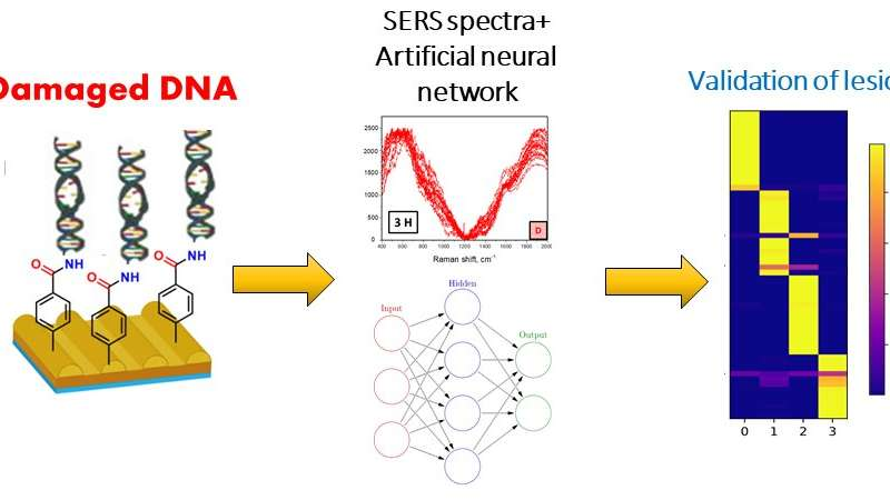 Researchers make neural networks successfully detect DNA damage caused by UV radiation