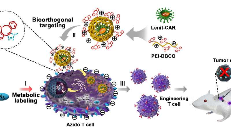 Scientists develop artificial chemical receptor to assist viral transduction for T cell engineering