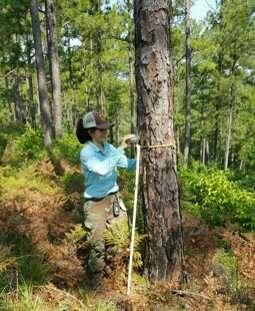 Researchers show best methods to help endangered woodpecker