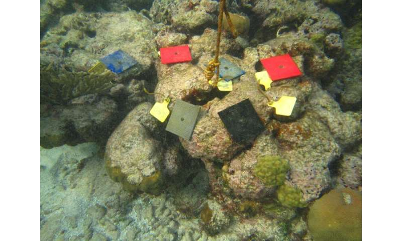 New study shows coral reef fish do not mind 3-D-printed corals
