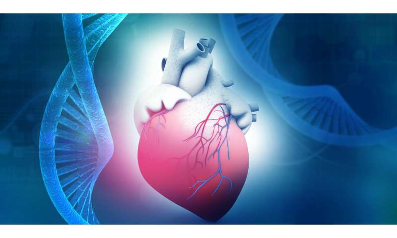 Researchers find eight new unique gene mutations in patients with hereditable heart muscle disease