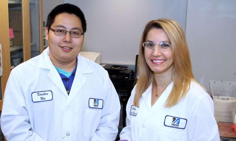 Researchers: Eggshells can help grow, heal bones