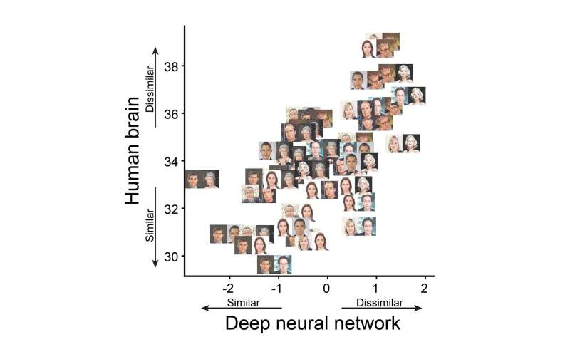 Artificial networks shed light on human face recognition
