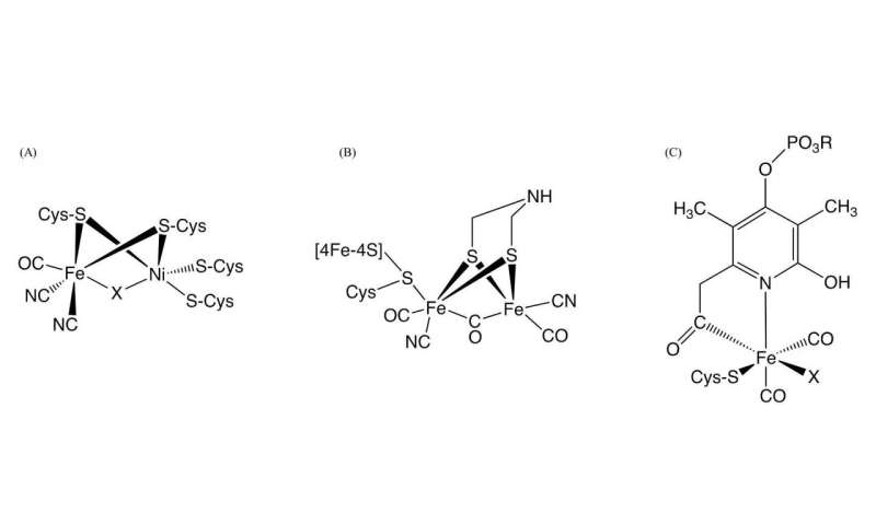 CO biosynthesis required for the assembly of the active site in NiFe-hydrogenase