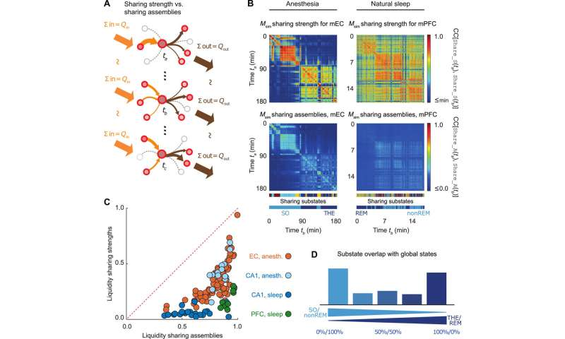 Computing hubs in the hippocampus and cortex