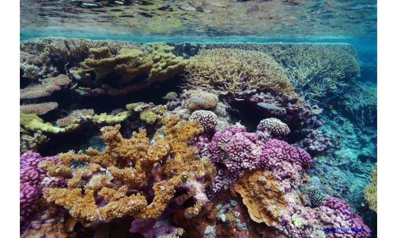 Coral bleaching is caused by more than just heat