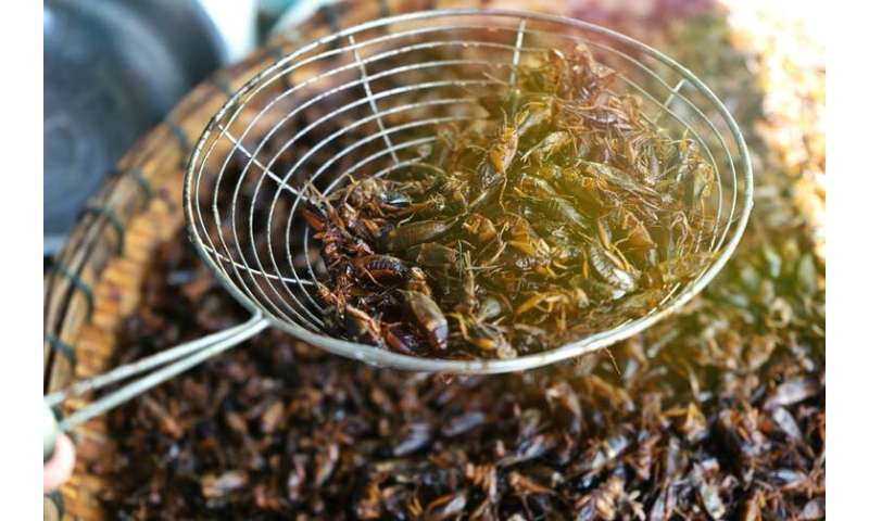 Eating insects is good for you and the planet, researchers insist